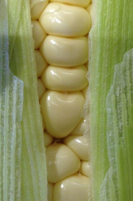 corn heart kernel