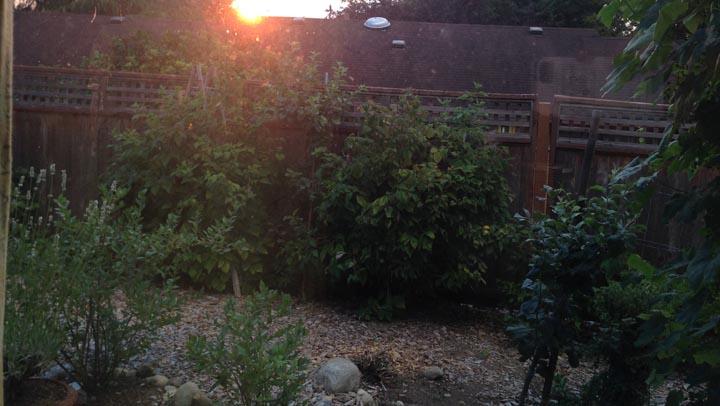 deceptive garden